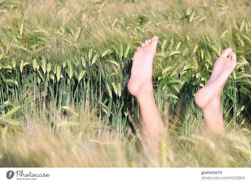 Finally summer holidays!   zest for life, good mood, feet up and enjoy the sun... Central perspective Summer Cornfield Grain field Field Relaxation Dream Happy