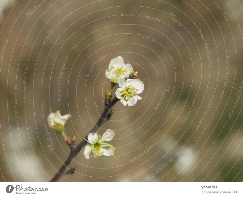 White Blossom Tree Yellow Near Branch Twig