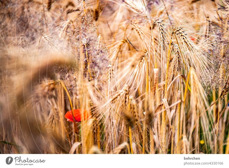 mo(h)ntags hideout Colour photo Ecological Awn Idyll idyllically Agriculture Exterior shot Harvest Nutrition Plant Agricultural crop Environment Landscape