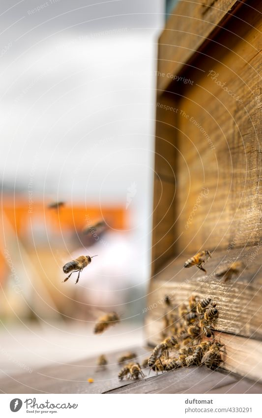 Macro photo of bees in front of hive Bee naturally Insect insects Animal Macro (Extreme close-up) Close-up Grand piano animals wildlife Pollen Exterior shot