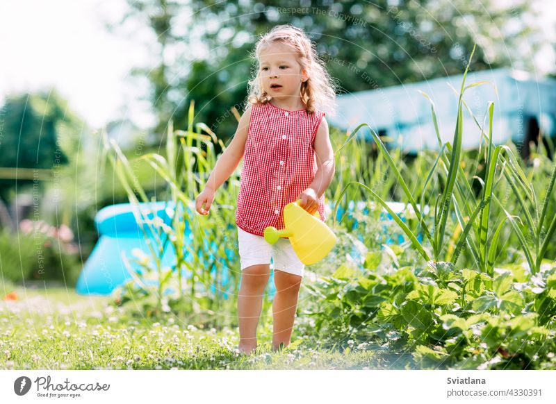 A charming baby is watering a strawberry bush in the garden from a children's toy watering can. Childhood, sun, summer, gardening childhood little girl smiling
