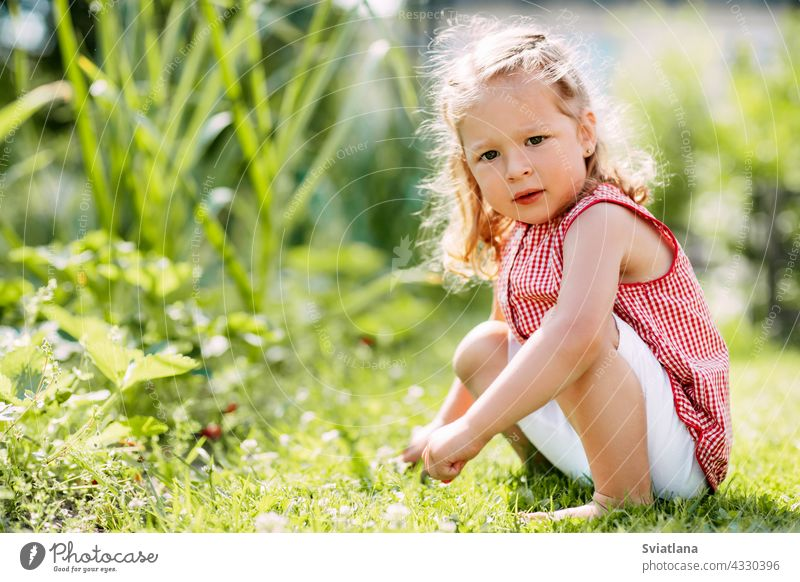 A cute baby is sitting on the grass in the park or in the garden girl adorable summer beautiful happy nature child young little green caucasian meadow sunny