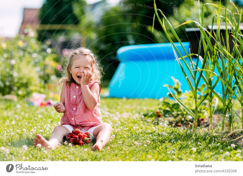 A charming little girl is sitting on the lawn in the garden, eating strawberries and laughing. Summer background, a place for text baby strawberry meadow