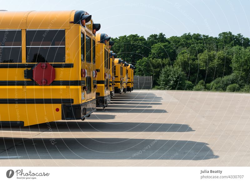 Line of yellow school buses in a parking lot; long shadows cast on the pavement and lush green trees in background back to school waiting outdoors nature