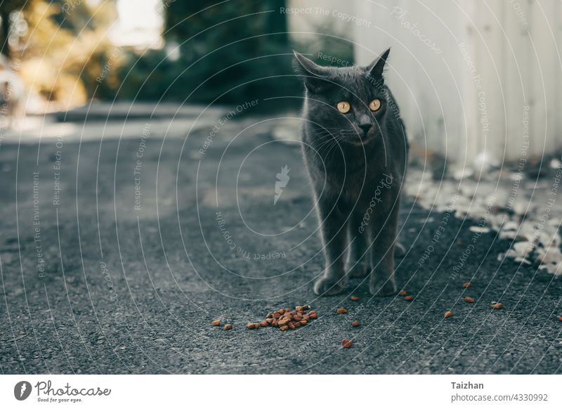Homeless Cat eating special feed on a street cat animal pet feline homeless kitten portrait cute small food outdoor furry mammal no people photography playful