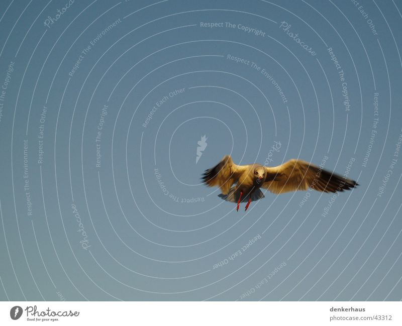 The last of its kind Bird Swallow Sky Blue Movement Aviation Wing Feather Snapshot