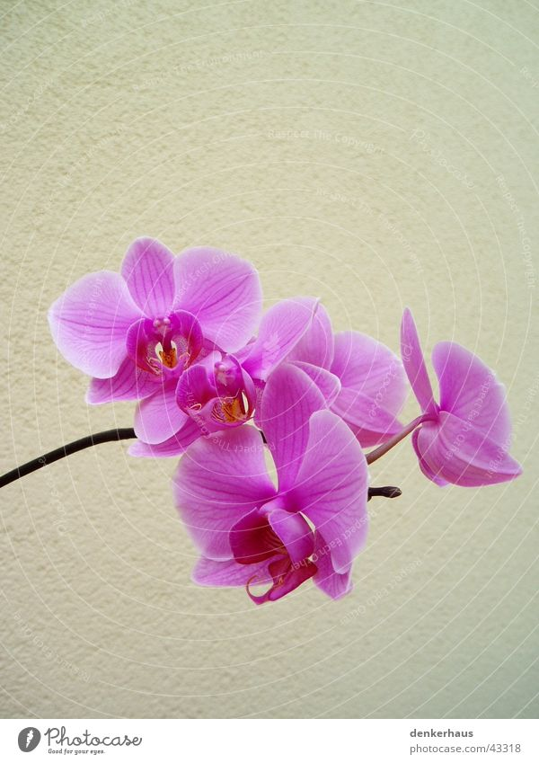 Flower Plant Blossom Blossoming Orchid