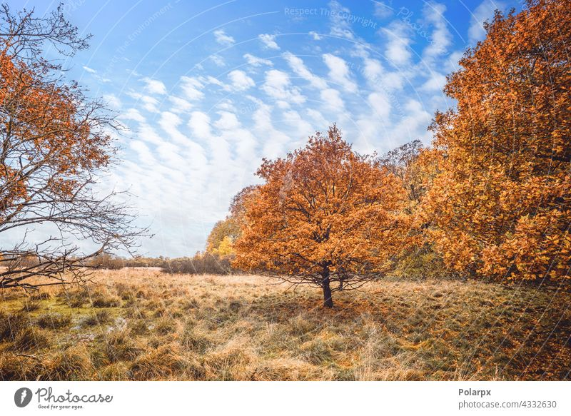 Trees in orange autumn colors in a swamp bright countryside mountain autumn leaves dead leaves quiet silence wetlands rest journey break yellow leaves promenade