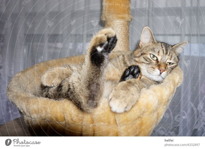 Cat relaxing in cat basket looking very relaxed Relaxation Contentment Sleep Lie Interior shot Safety (feeling of) Calm Animal portrait Pet Animal face