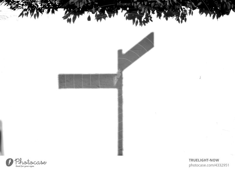 The shadow of a sign with two street names appears thanks to strong sunlight on a bright white wall over the edge of which a hedge stretches. Sunlight Shadow