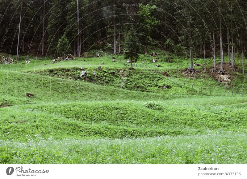 Meadow in front of forest edge with bumps forming a pattern Edge of the forest Bumps Pattern Green Nature Forest Landscape Grass Tree