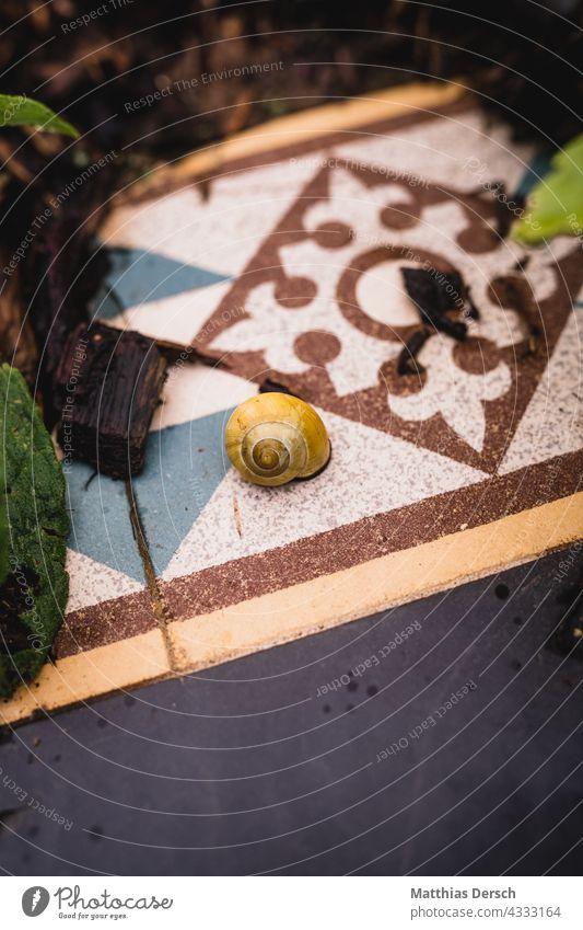 Snail shell on kitchen tile Crumpet tiles Nature Close-up Animal Colour photo Garden Exterior shot Feeler