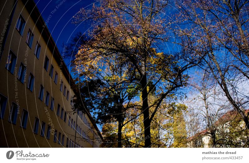 AUTUMN IN THE INNER COURTYARD Environment Nature Landscape Sky Clouds Autumn Beautiful weather Tree Leaf Garden Town House (Residential Structure) Building