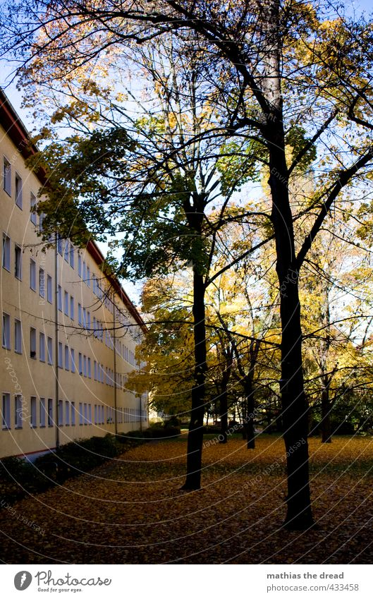 inner courtyard Environment Nature Sky Autumn Beautiful weather Tree Grass Park Town House (Residential Structure) Building Architecture Window