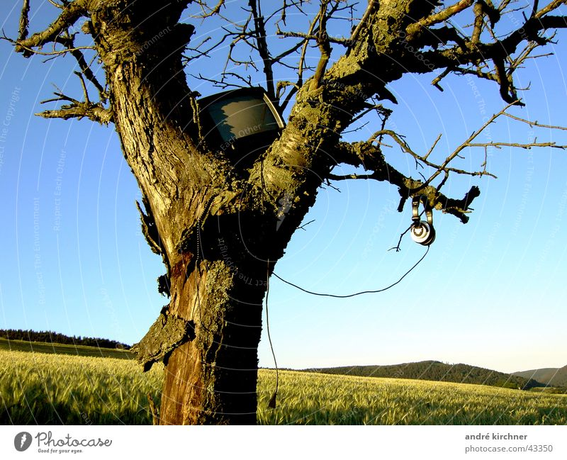 Tree Summer Meadow Field TV set Headphones