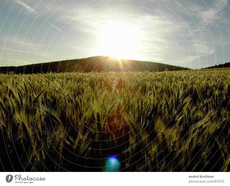 Sky Summer Mountain Field Grain Hill Rye