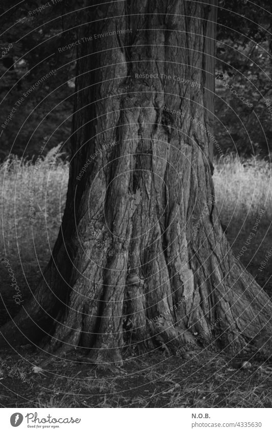 Tree trunk in black and white Old Black & white photo black-and-white Exterior shot B/W Deserted Gray Nature furrows rutted Force vigorous constant stability