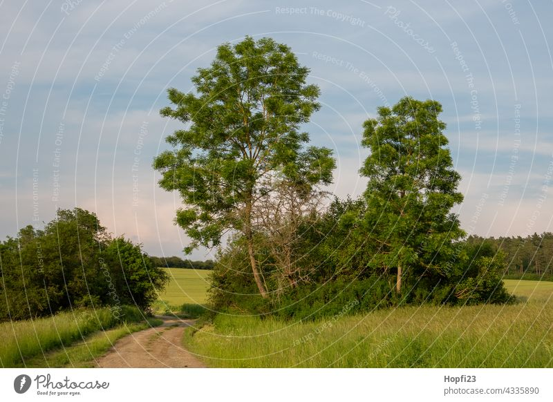 Landscape in summer Nature Close-up Rural Sky Tree Exterior shot Blue Deserted Day Colour photo Sunlight Weather Contrast Shadow Light Forest Plant Green Clouds