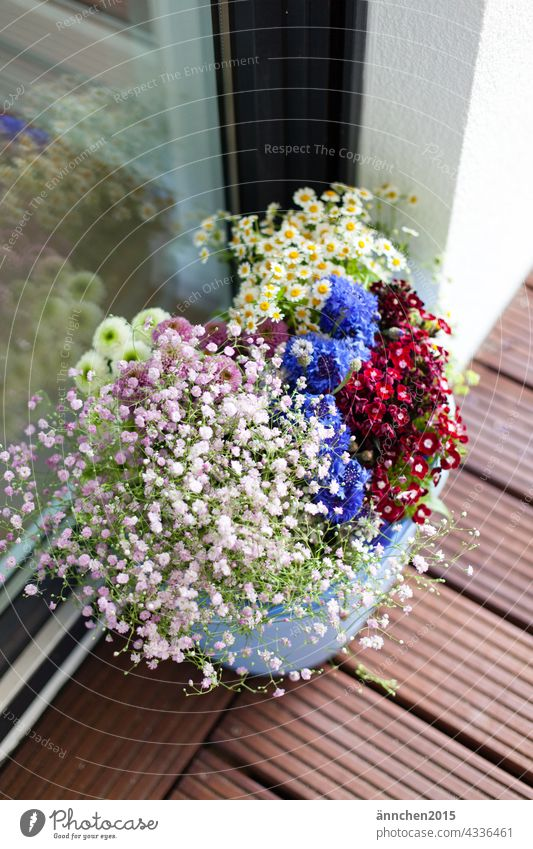 Various flowers stand in a bucket at a window pane blossoms Nature Blossoming Plant Spring Colour photo Summer pretty naturally Exterior shot Garden cornflowers