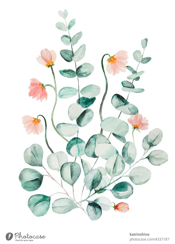 Watercolor pink flowers and green eucalyptus leaves bouquet illustration Botanical Decoration Drawing Element Foliage Garden Hand drawn Isolated Ornament Paint
