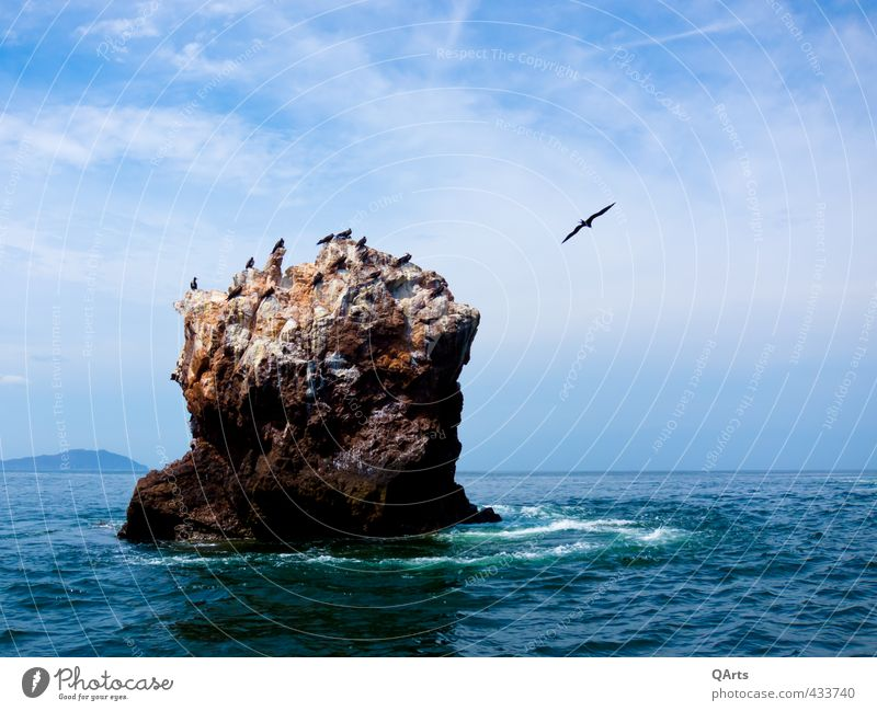 Sky Nature Vacation & Travel Water Ocean Clouds Animal Far-off places Freedom Rock Air Bird Flying Waves Tourism Island