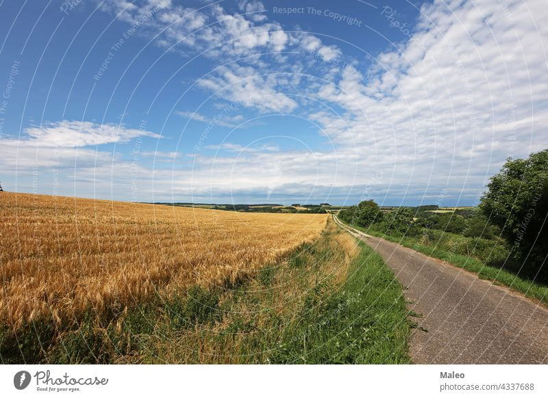 Summer landscape with fields and meadows on a clear day green sky grass cloud summer nature blue rural sun hill spring horizon pasture outdoor idyllic sunlight