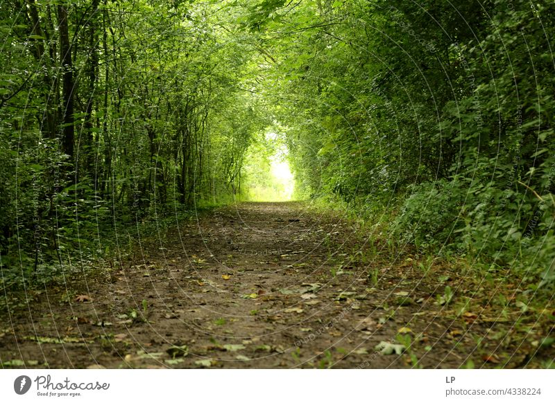 tunnel through trees in the wood Tunnel Portal Park Wood Hedge Green Alley Passage Arch Forest Row Plant Nature rural scene Landscape Contrast Light Sunlight