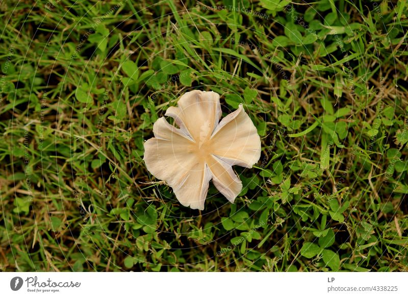 mushroom on a backgroun of green grass Contrast Deserted Structures and shapes Abstract Experimental Close-up Exterior shot Subdued colour Colour photo