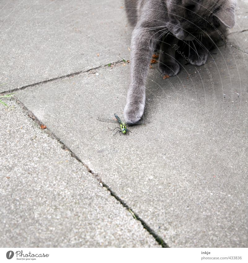 ...... Deserted Terrace Animal Pet Wild animal Cat Dragonfly 2 Paving tiles Concrete Catch To hold on Hunting Playing Threat Curiosity Emotions Interest