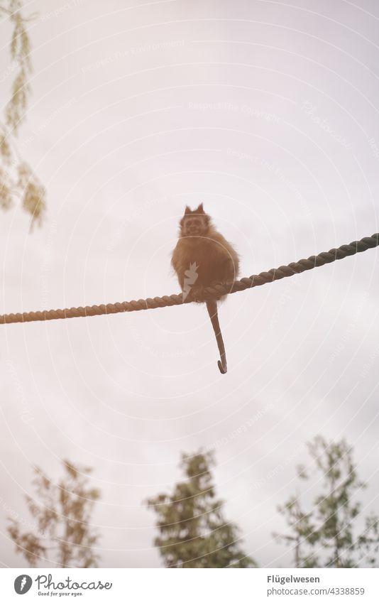 charade Monkeys monkey Rope Cable car ropes Zoo Animal portrait animal park monkey forest