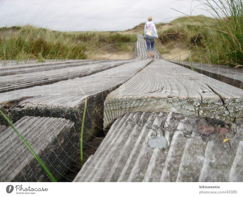 Nature Summer Vacation & Travel Grass Landscape To go for a walk Beach dune Amrum