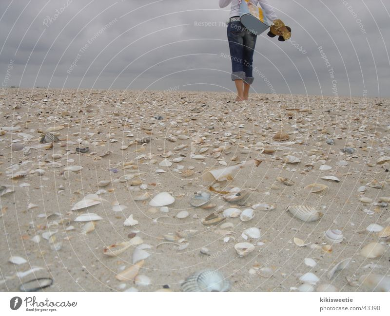 Beach Amrum Mussel Summer Clouds Europe North Sea To go for a walk Nature Far-off places