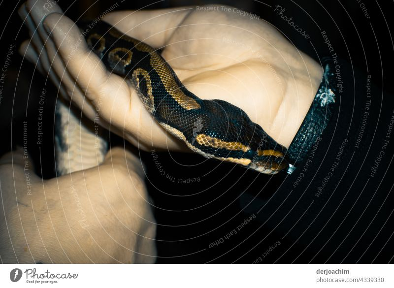Cuddly and warm. The little snake is so hand-warm. It slithers up your arm. Snake Colour photo Wild animal Animal Close-up Animal portrait Nature Animal face