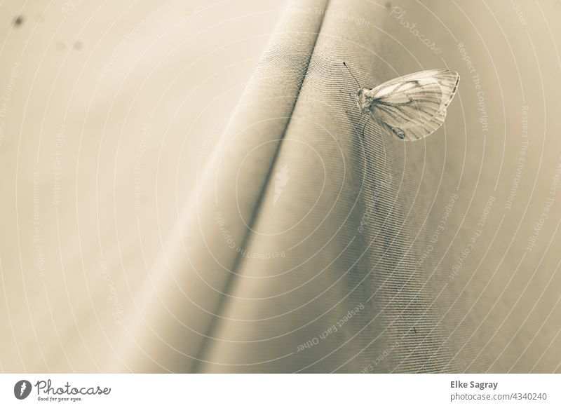 Butterfly cabbage white drying after a rain shower Insect Macro (Extreme close-up) Grand piano Animal Nature Close-up Cloth Animal portrait Deserted