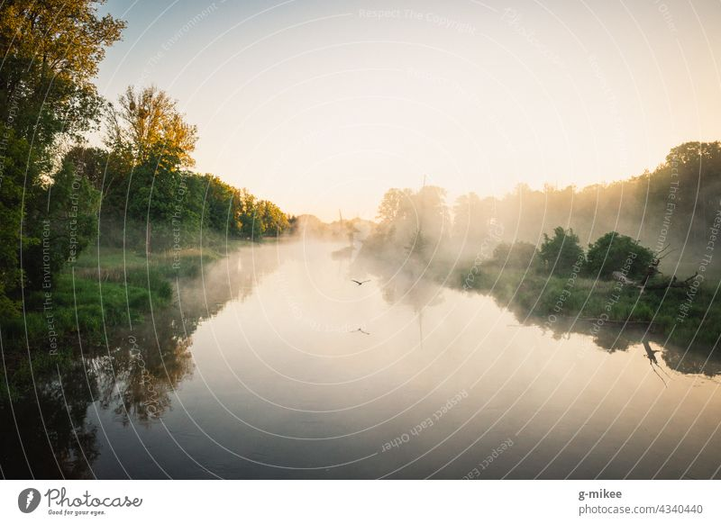 A bird over the river in the morning Sunrise River Body of water Bird flight Fog Morning silent tranquillity Nature Landscape Freedom Reflection Dawn Water