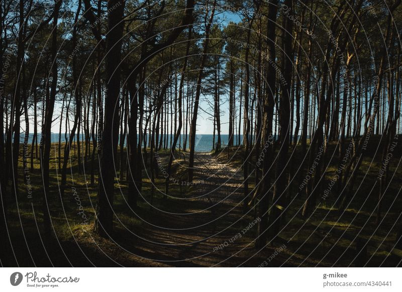 Forest by the sea Ocean Beach Horizon Baltic Sea coast Vacation & Travel Nature Landscape path hiking trail trees Landscape - Nature Blue Colour photo vacation