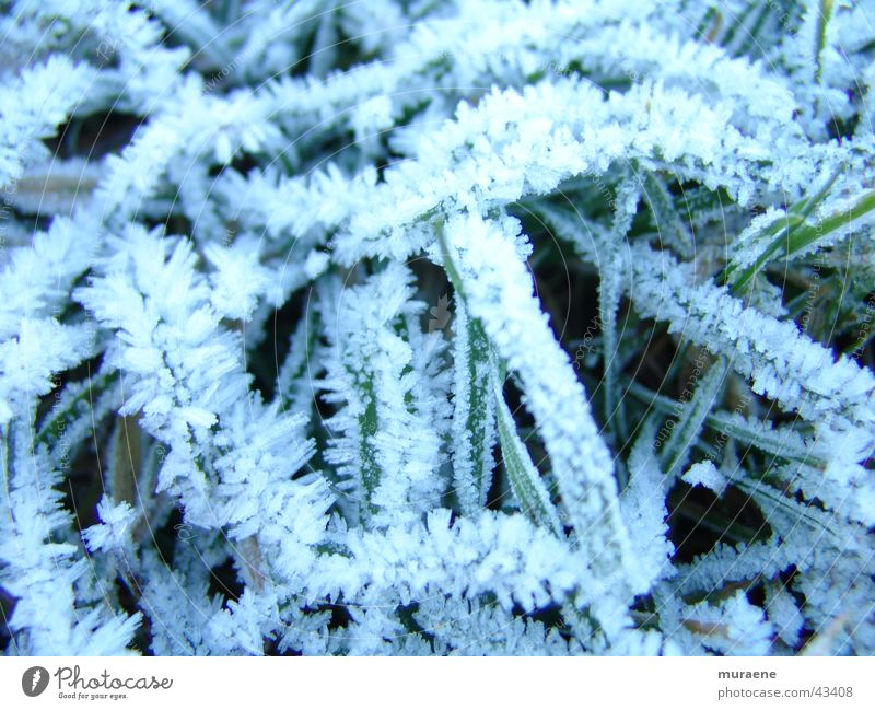Winter Snow Grass Hoar frost