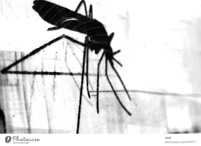 ::.. in - champagne ...: Insect Poster Mosquitos Black White Obscure Detail Macro (Extreme close-up) Trashy