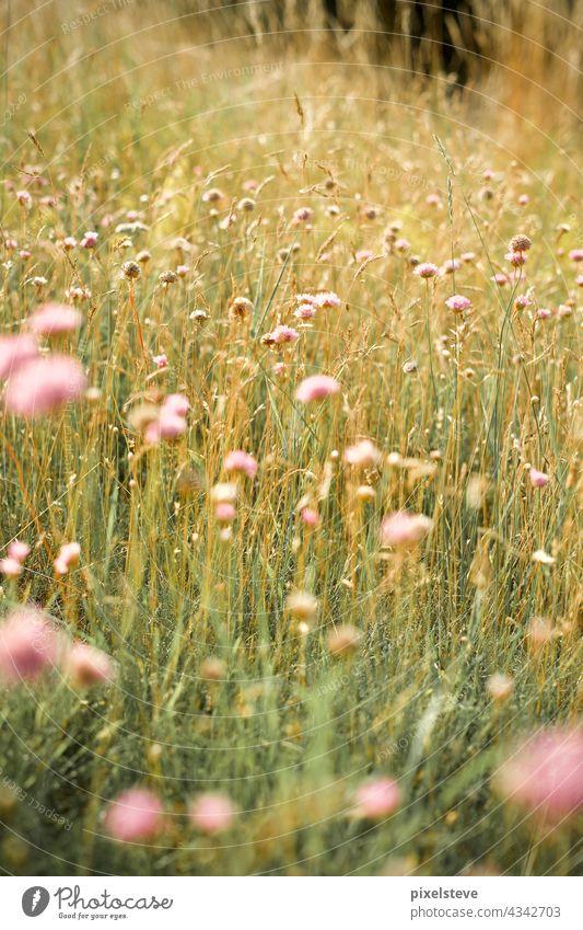 Wildflowers in a summer meadow wild flowers Sun Meadow wildflower meadow sunshine uncontrolled growth Wildflower Bouquet Wildflower Bed Meadow flower Fairy tale