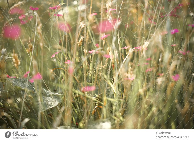 Wildflowers in a summer meadow wild flowers Meadow Flower meadow Environment Blossom pink Summertime Summer's day Spring Climate change plants wax Nature