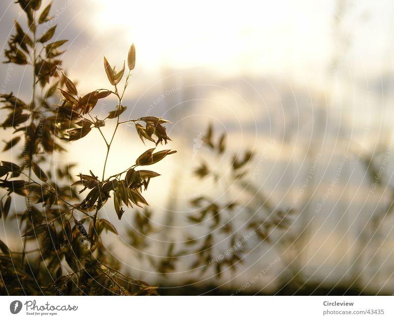 Nature Sun Plant