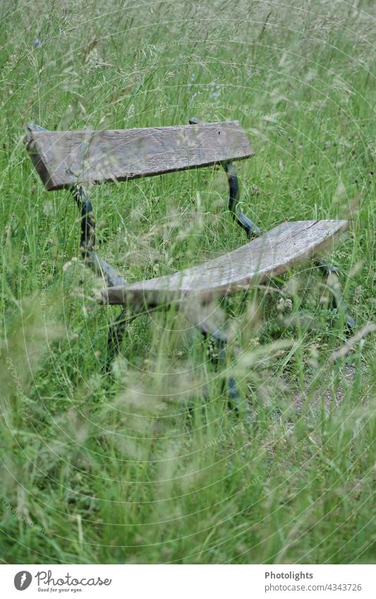 Old bench stands on a meadow with tall grasses Bench Wooden bench Meadow Green Brown Black White Pollen Lawn Colour photo Exterior shot Nature Grass Deserted