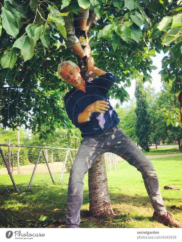 [PARKTOUR HH 2021] It's good to eat with them Cherry tree Garden robber ladder fun Thief cherries Summer Force Man Green Legs apart Harvest Nature jeans Tree