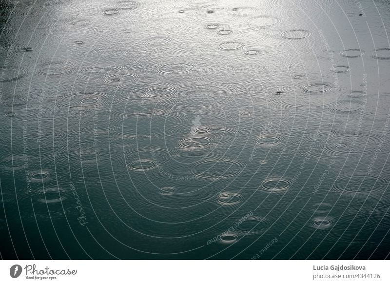 Rain drops falling the surface on river making circles on the water. Picture suitable as a background. abstract abstract background bubble circles on water