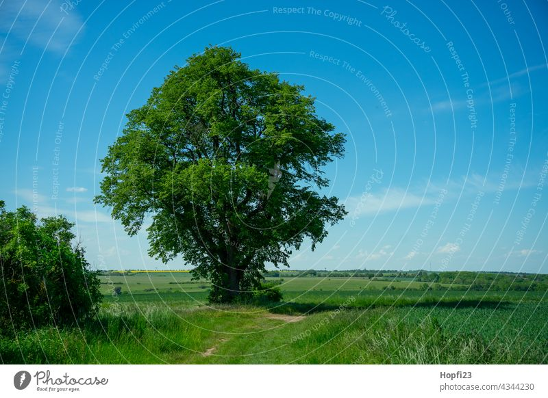 Landscape in summer Nature Close-up Rural Field Arable land acre Sky Tree Exterior shot Blue Deserted Day Colour photo Sunlight Weather Contrast Shadow Light
