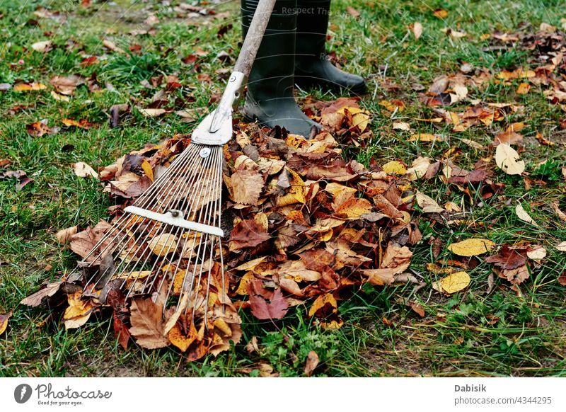 Woman raking pile of fall leaves at garden with rake autumn backyard clean cleanup gardening yardwork close-up colorful equipment foliage grass green heap job