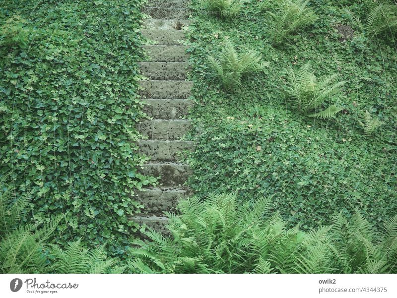 Carpeting Stairs Ivy Manmade structures Firm Detail Long shot Colour photo Overgrown Deserted Fairytale landscape Promenade Vintage Transience Idyll Historic