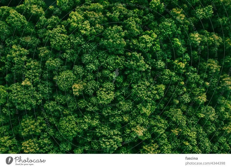 Summer in deciduous forest aerial top view park trees green summer nature natural treetops above texture landscape evening cloudy environment woods drone flight