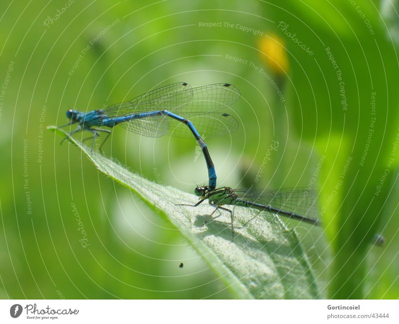 Nature Blue Green Plant Sun Summer Leaf Animal Environment Garden Spring Pair of animals In pairs Wild animal Wing Insect