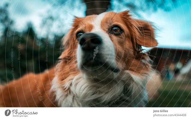 Cute dog Ebbi dreaming around Animal Animal portrait Pet Exterior shot Love of animals Shallow depth of field Colour photo Animal face Looking Observe Curiosity